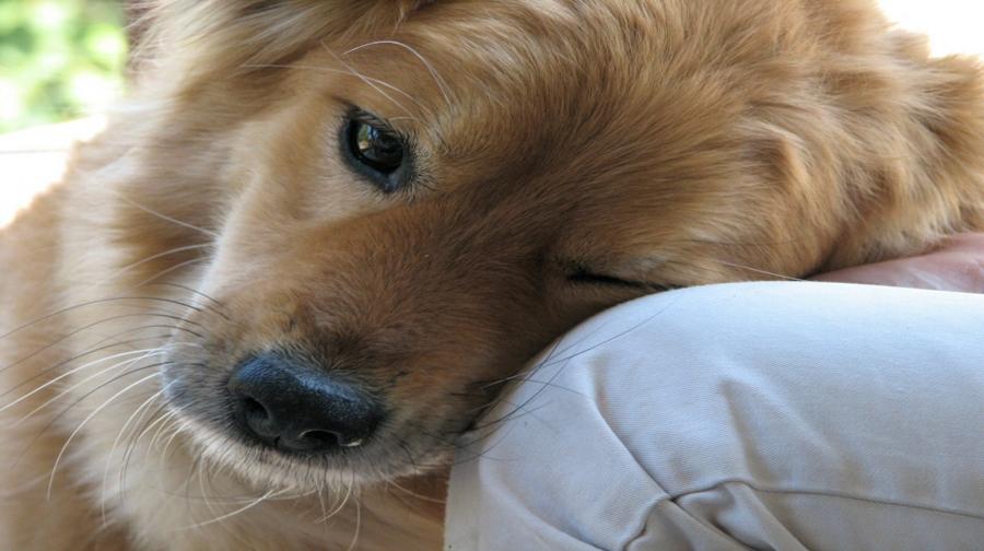 Photo of کتے کی زندگی کا مقصد اپنے مالک کو خوش کرنا