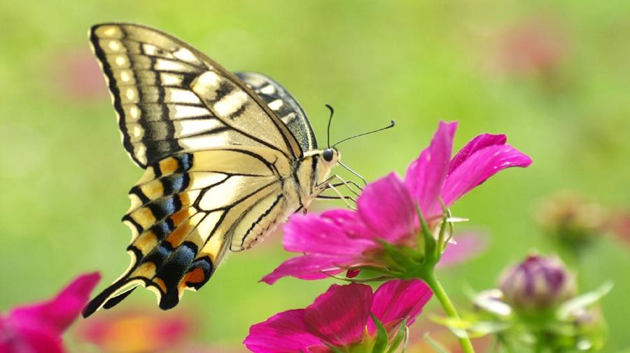 Photo of موسمیاتی تبدیلی، تتلیلوں اور مکھیوں کی افزائش متاثر