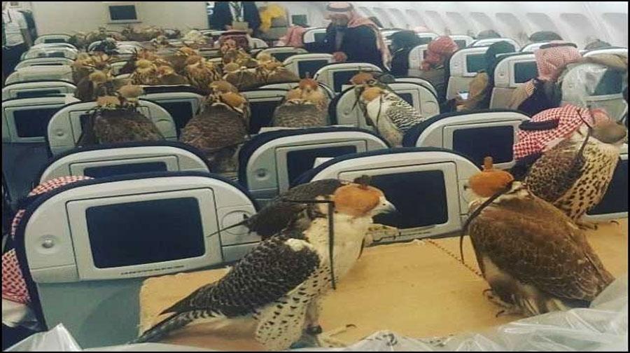 Photo of سعودی شہزادے کے 80 عقابوں کا جہاز کی سیٹ پر سفر