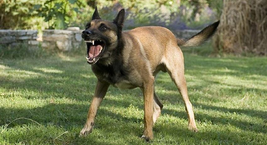 Photo of کتوں کے کاٹنے پہ وزیراعلٰی پنجاب برہم