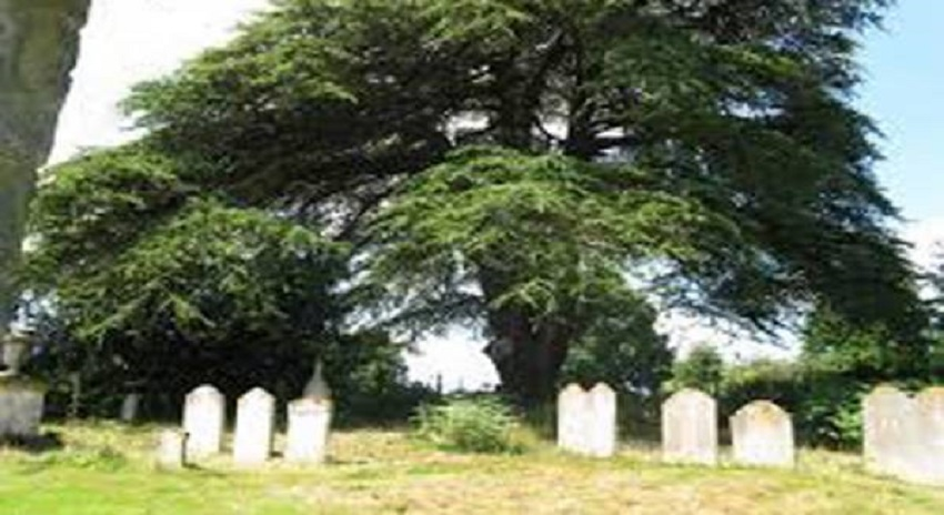 Photo of جنّات کی قبر پر شرط لگانے والے نوجوان کا ایسا انجام کہ پھر کوئی ایسی حرکت کرنے سے پہلے سو بار سوچے گا