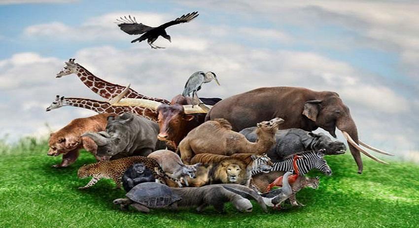 Photo of تباہی سے دوچار حیاتیاتی تنوع
