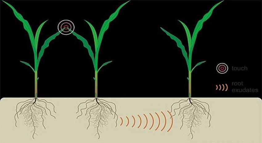 Photo of پودے آپس میں باتیں کرتے ہیں اور ایکدوسرے کی مدد بھی