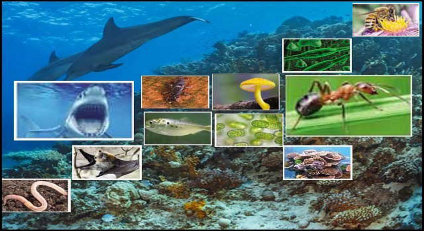 Photo of ماحولیاتی نظام کی بقاء کے ضامن جاندار