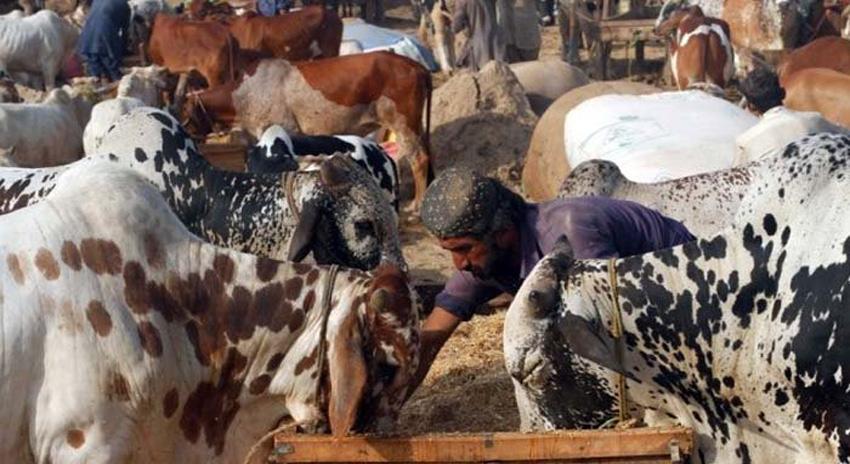 Photo of کراچی: سپرہائی وے کی منڈی میں جانوروں کی قلت، قیمتیں آسمان پر پہنچ گئیں