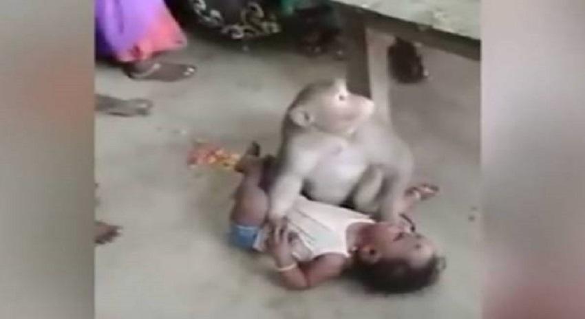 Photo of بھارت میں ایک بندر کی گھر میں گھس کر بچہ ''چرانے''کی کوشش،ویڈیو وائرل ہوگئی