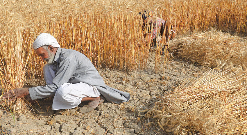 Photo of کے پی کے میں چار ارب کی گندم پر 13 ارب سے زائد سود کا انکشاف