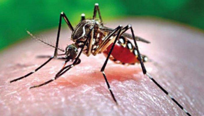 اب ڈینگی وائرس کے تشخیصی ٹیسٹ مفت کیے جائیں گے