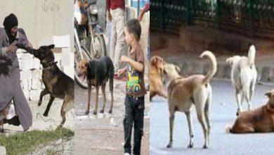 Photo of آوارہ کتوں کے کاٹنے پرمزید 6 افراد کو زخمی