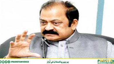 Photo of شیخ رشید جیسے سیاسی گیدڑ ہی نیب نیازی گٹھ جوڑ کو ٹارزن سمجھ سکتے ہیں