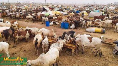 Photo of مویشی منڈی شام 7 بجے بند کرنے کا حکم