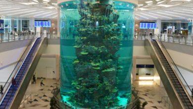 Photo of دنیا کا سب سے بڑا مچھلی گھر