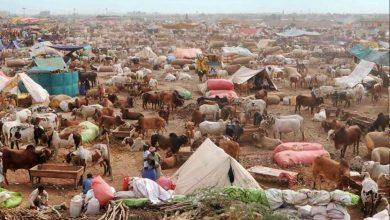 Photo of ملک بھر میں 700 مویشی منڈیاں قائم