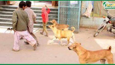 Photo of سندھ  میں کتوں کے کاٹنے کے واقعات پر عدالت کے ریمارکس ، اراکین اسمبلی کے لئے مشکل