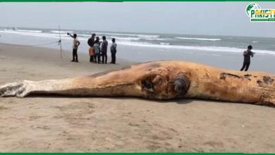 Photo of بنگلہ دیش: ایک برائڈ نامی وہیل مچھلی مردہ حالت میں ساحل پر پائی گئی