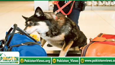Photo of پاک فوج کے تربیت یافتہ کتوں نے5کورونا کیسز کی نشاندہی کی