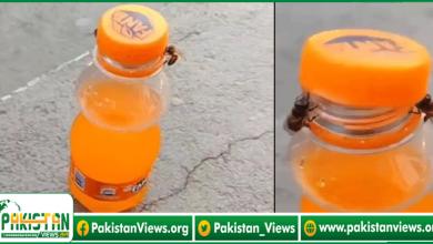 Photo of شہد کی مکھیوں نے بوتل کا ڈھکن کھول لیا، کارنامے کی ویڈیو وائرل