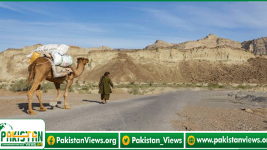 Photo of بلوچستان میں اونٹوں کے ذریعے منشیات کی اسمگلنگ ناکام