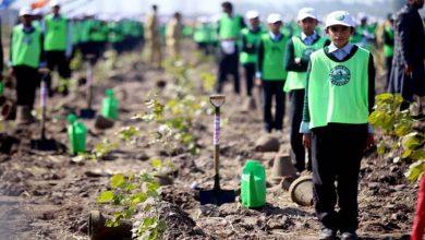 Photo of وزیراعظم کے 10 بلین ٹری سونامی منصوبے کو شاندار کامیابی