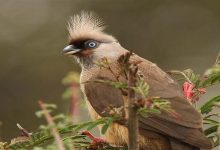 Photo of مختلف جانوروں اور پرندوں کی بعض عادات نہایت عجیب ہوتی ہیں