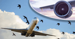 طیاروں سے پرندے ٹکرانے پرقومی ائیر لائن نے رپورٹ جاری کر دی